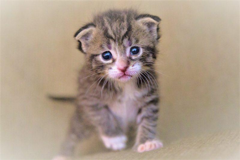 かわいそうな猫