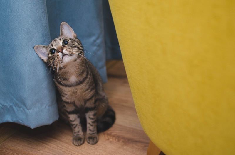 猫が猫砂を食べる理由