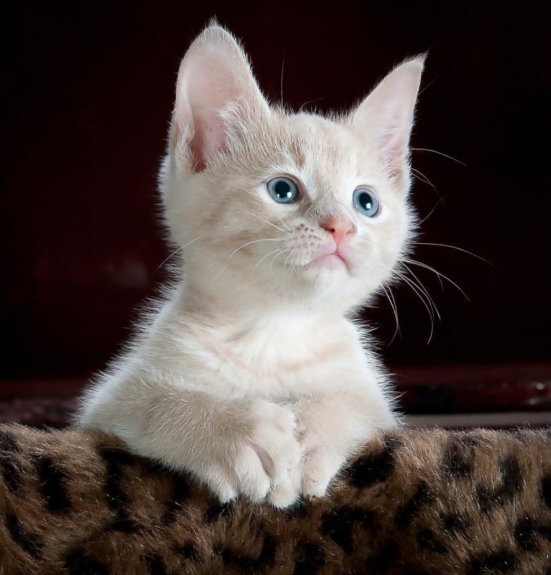 猫が猫砂を食べるのはなぜ?