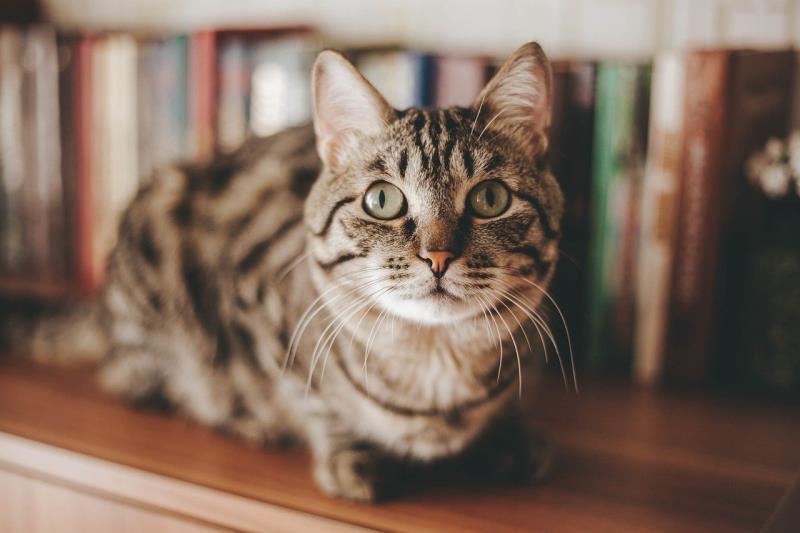 猫が猫砂を食べる原因