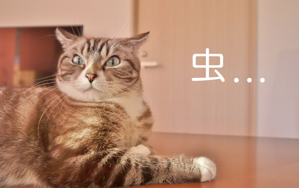 おからの猫砂は虫がつく場合も
