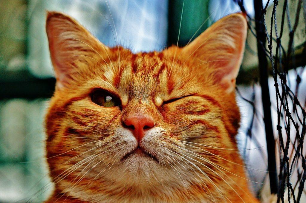 おからの猫砂は臭いが気になる場合も