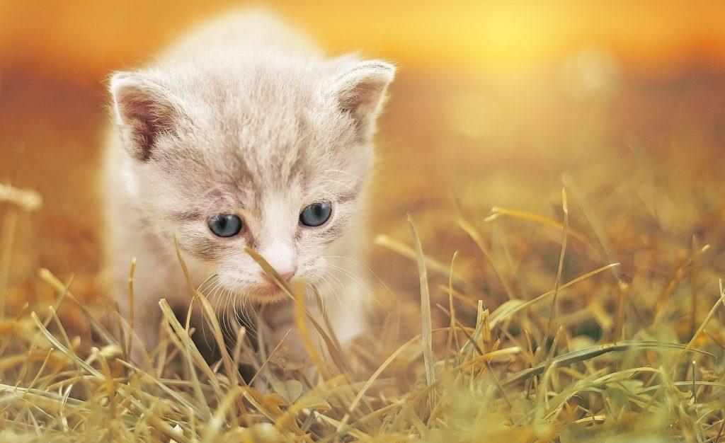 猫砂を選ぶ基準