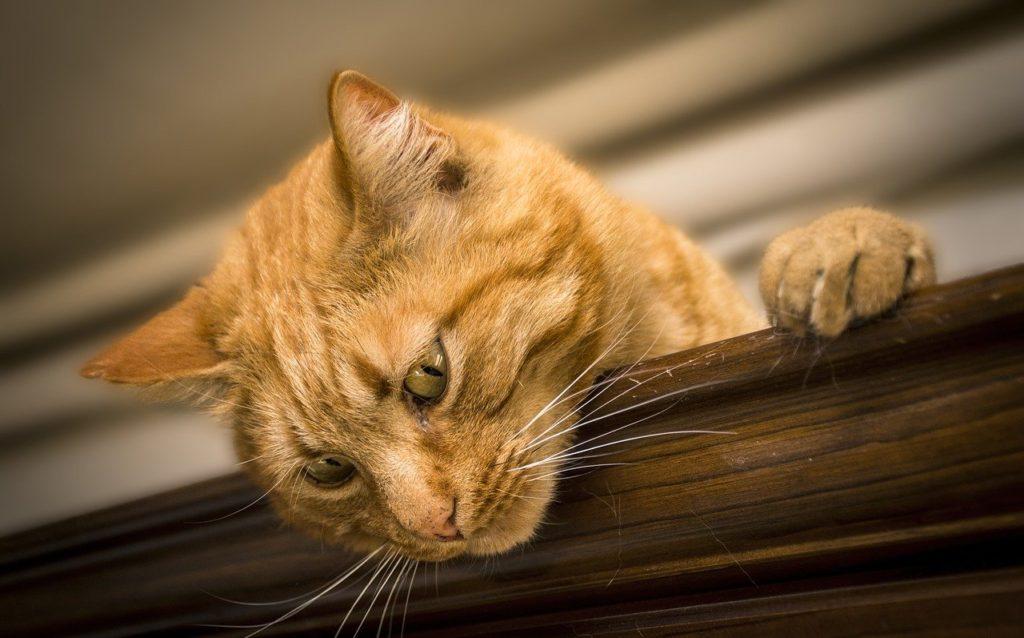 シリカゲルの猫砂、向いている人向いていない人