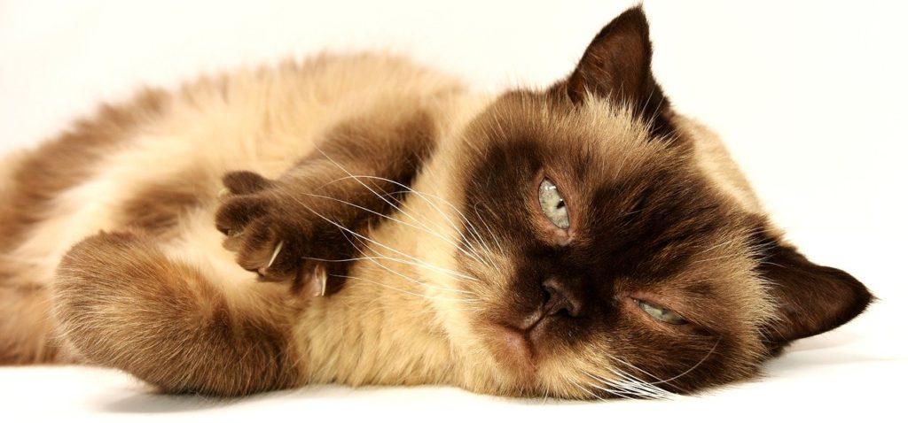 紙タイプの猫砂が合わない猫もいる