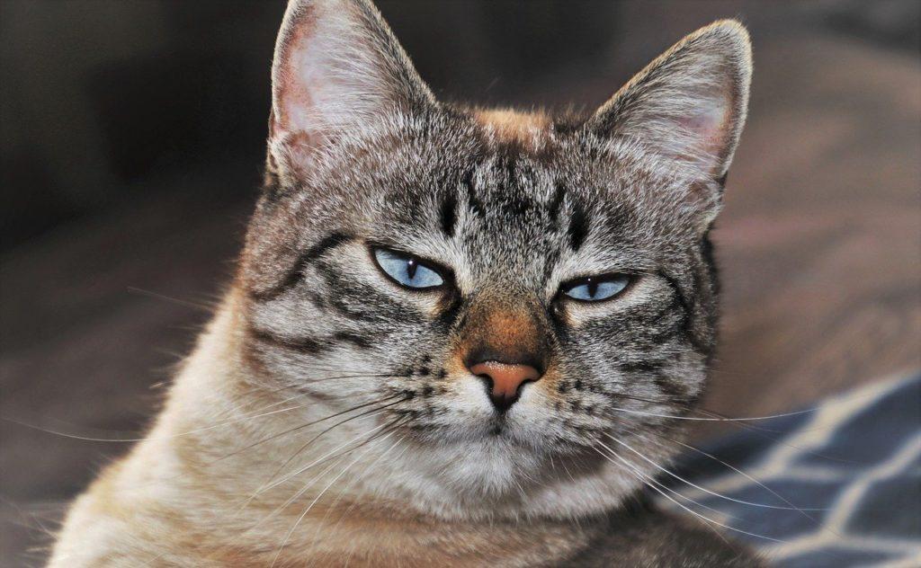 紙製の猫砂は猫によって好みが分かれる