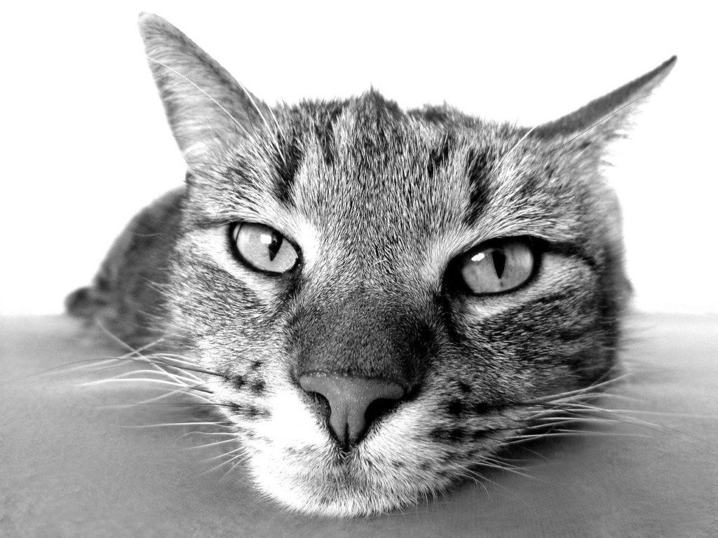 紙製猫砂、合わない猫がとる行動