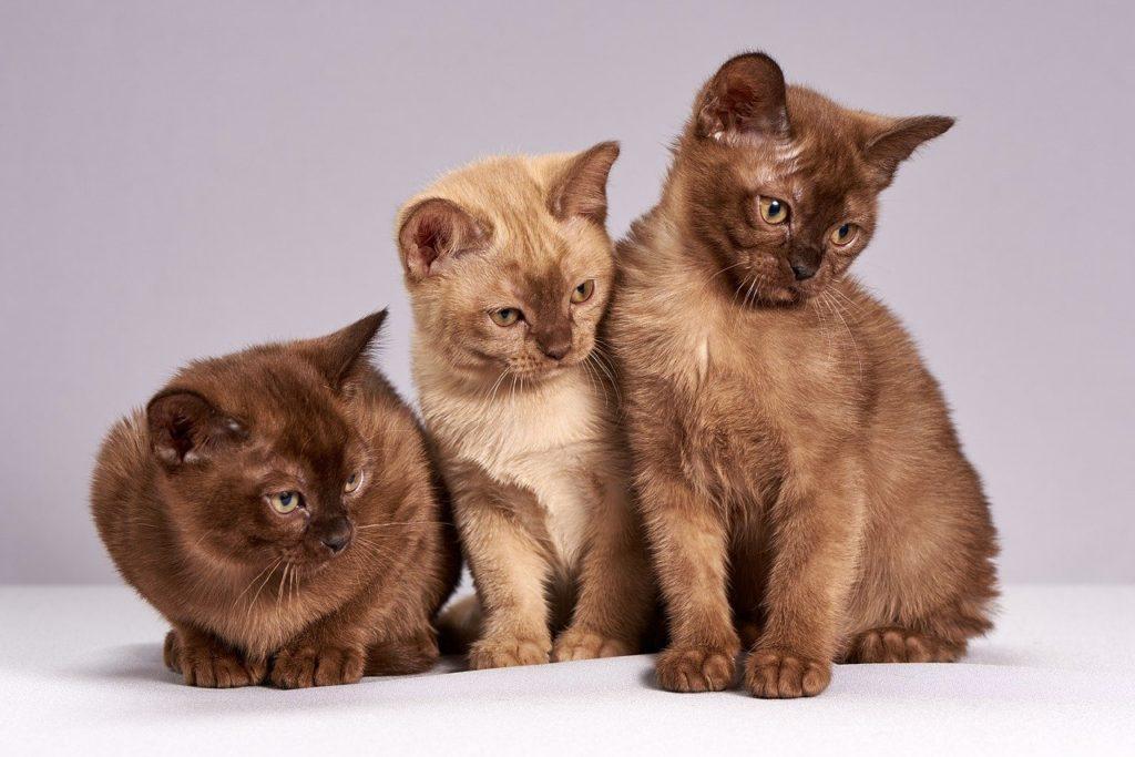 紙の猫砂のおすすめ3選