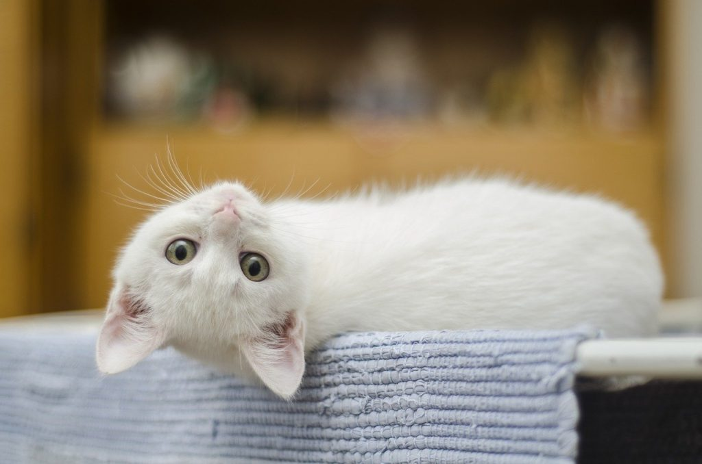猫砂おからタイプの特徴