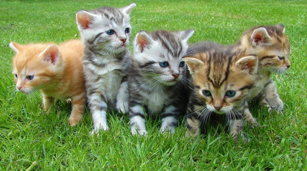 おから猫砂の人気商品