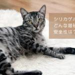 シリカゲルの猫砂の特徴を紹介