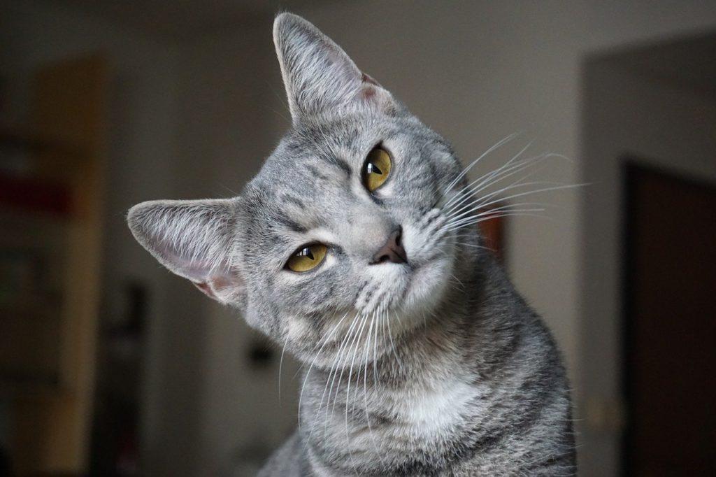 鉱物系の猫砂の安全性は?