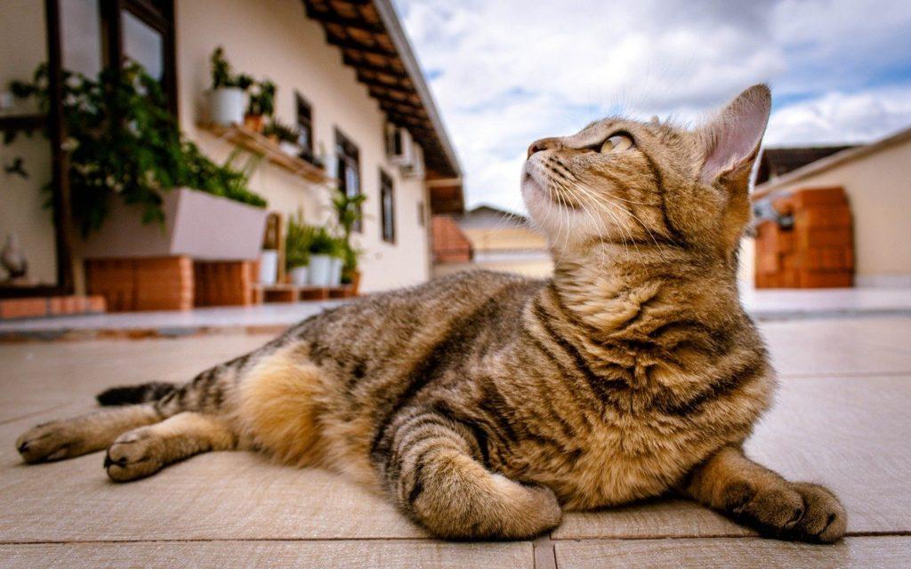 鉱物系猫砂のメリット