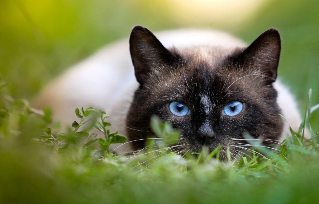 鉱物系の猫砂の捨て方