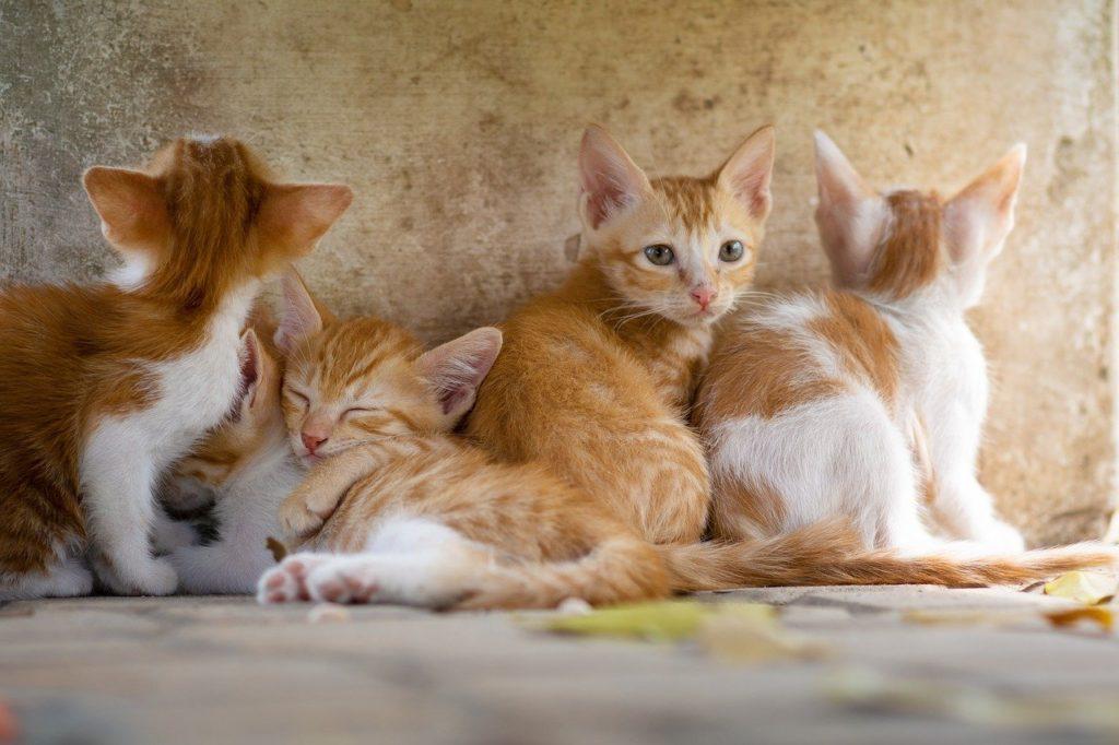 鉱物系猫砂のおすすめ人気3選