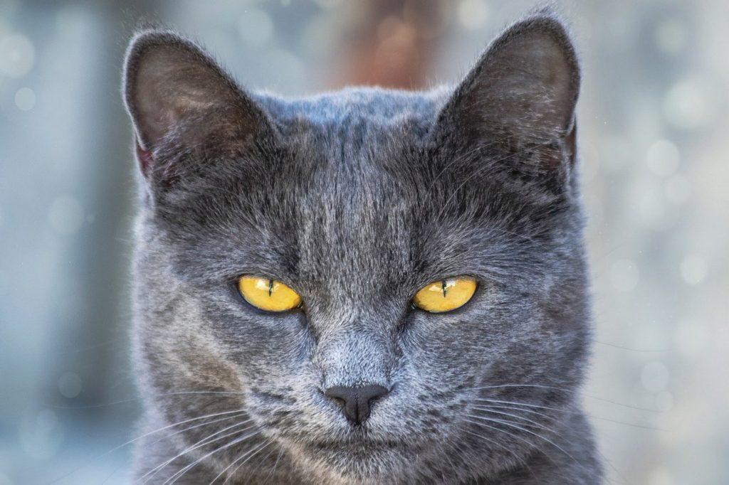 鉱物系の猫砂の粉じんには注意が必要