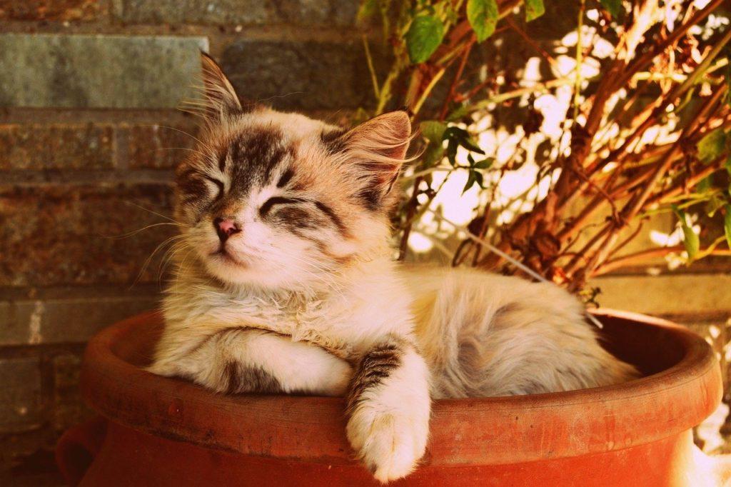 鉱物系の猫砂はネコに人気ナンバーワン